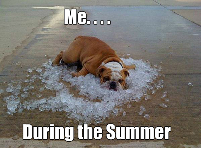 summer-life_o_1952471